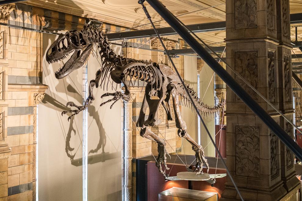 natural-history-museum-008