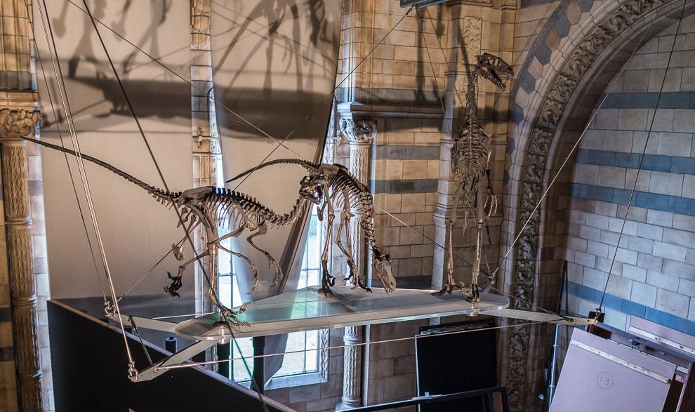 natural-history-museum-010