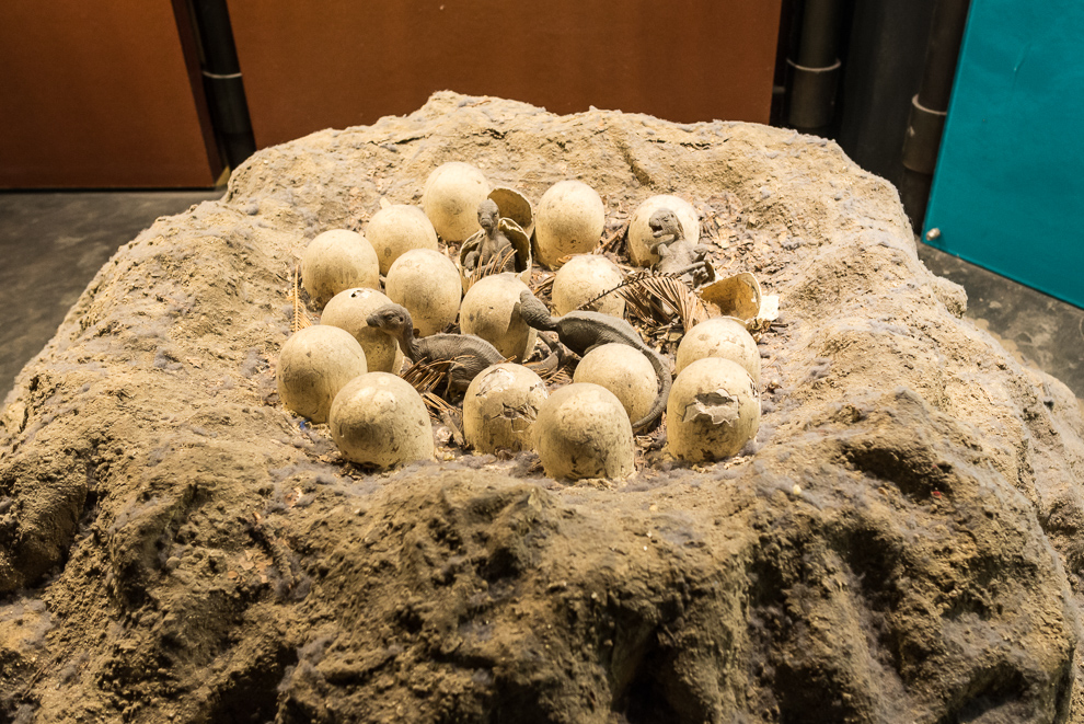 natural-history-museum-011