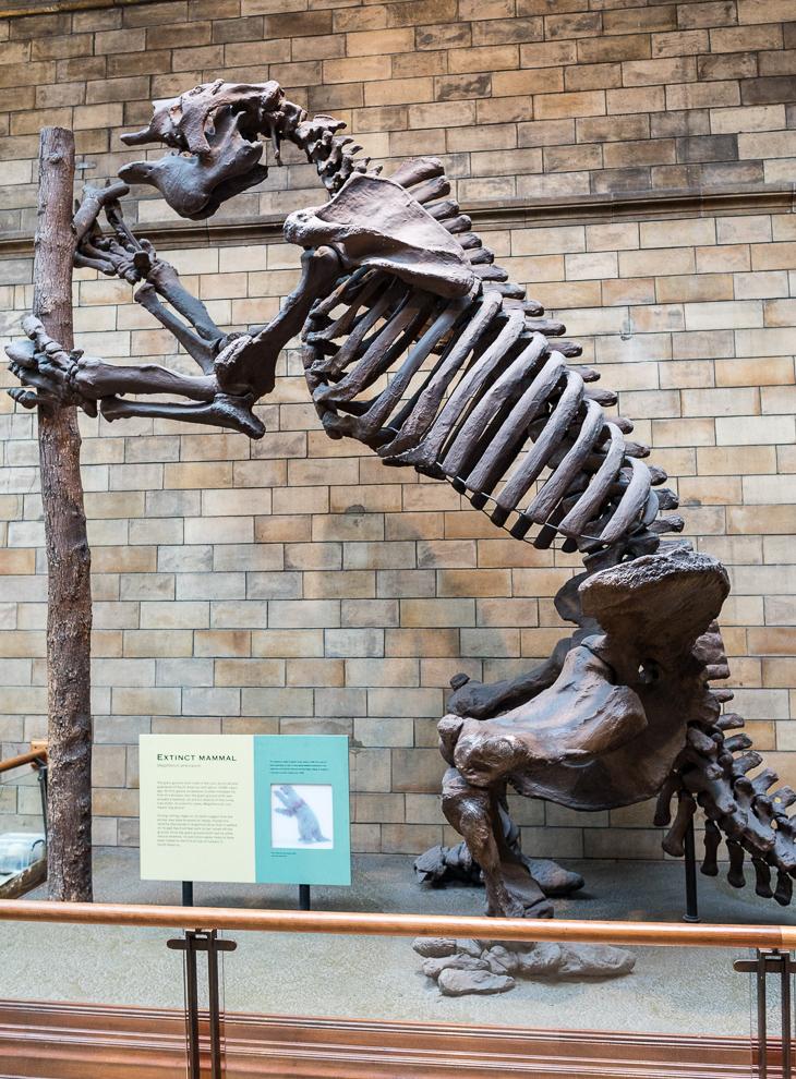 natural-history-museum-024