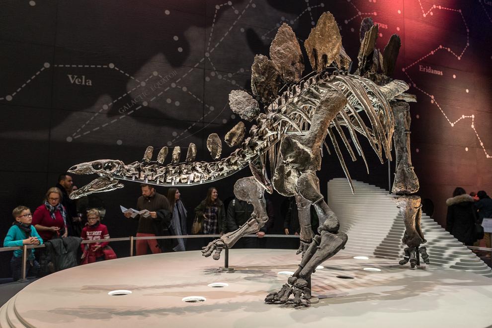 natural-history-museum-026