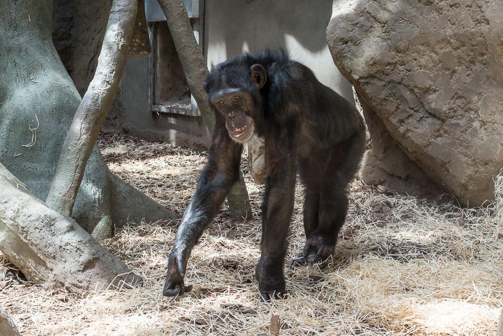 ostrava-zoo-012