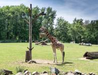 ostrava-zoo-small
